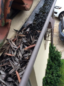 Gutter Cleaning. El Nino special!